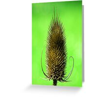 Teasel Head Greeting Card