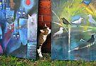 Neighbour's cat by Karin Zeller