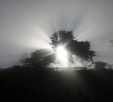 LIGHT RAYS  by RANON