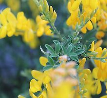 Flowers and Plants by Nanurtalik