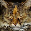 Cat Nap by Bill Morgenstern