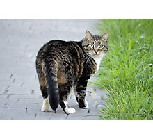Serious Kitty | Center Moriches, New York  Photographic Print