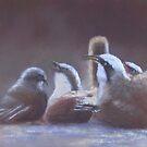 Dust Bath - Grey-crowned Babblers by JulieWickham