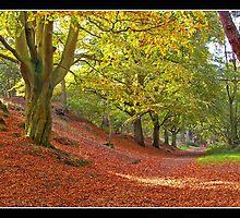 Mousehold Autumn 2 by Gordon Holmes