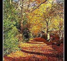 Autumn on Mousehold Heath,Norwich by Gordon Holmes