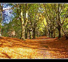 Autumn by Gordon Holmes