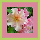 Ruffled Rhododendron Blossoms by Betty Mackey