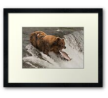 Bear about to catch salmon in mouth Framed Print
