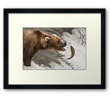 Brown bear about to catch a salmon Framed Print