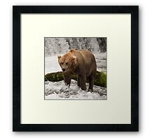Brown bear beside mossy rock below waterfall Framed Print