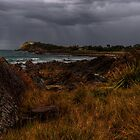 headland forster by gutto