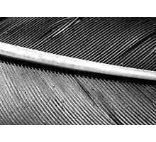 MACRO OF A FEATHER Photographic Print