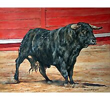 A load of old Bull. Photographic Print