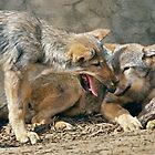 Best Friends (Grey Wolves) by Krys Bailey