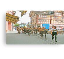 Appenzell Switzerland Cow March Canvas Print