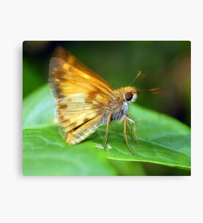 A Moth I Think Canvas Print