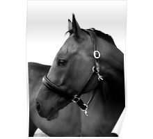 Horse Named John Poster