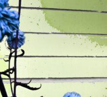 blue carnations Sticker