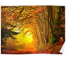 Light of Autumn forest Poster