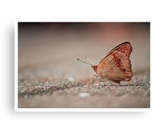 Brown Butterfly - Unknown Species Canvas Print