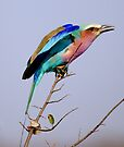 Lilac Breasted Roller - Pre Flight Check by Michael  Moss