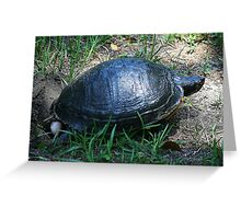 Turtle Laying Her Eggs Greeting Card
