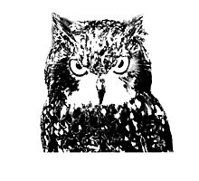 Owl Eyes Photographic Print