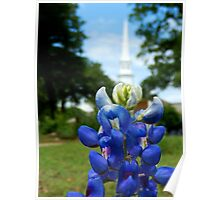 BLUE BONNET AND CHURCH STEEPLE  Poster