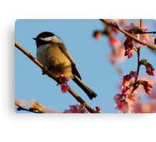 Chickadee: Bathed in a Fading Light Canvas Print