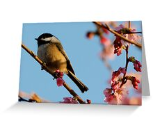 Chickadee: Bathed in a Fading Light Greeting Card