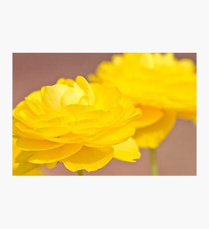 Yellow Flower Macro Photographic Print