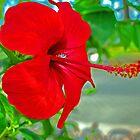 Red flower  by KateSecretwomen