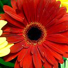 red flower by sky   princess