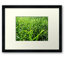 Why should I cut the grass? Framed Print