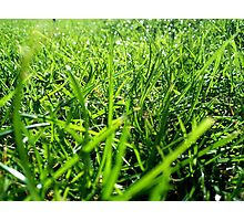 Why should I cut the grass? Photographic Print