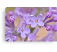 Lilac Macro, As Is Canvas Print