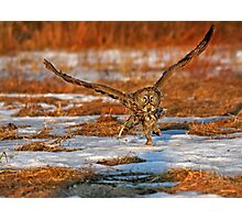 "Great Gray Owl ""Runway"" Photographic Print"