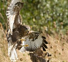 Buzzard Landing by Matthew Walters