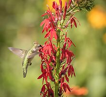 Ruby Throated Hummingbird 7-2015 by Thomas Young
