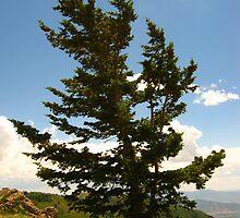 A Tree by JoAnn Glennie