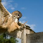 Eagle Owl Landing by Matthew Walters