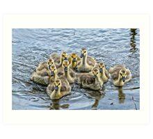 a gaggle of goslings Art Print