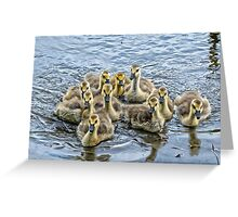 a gaggle of goslings Greeting Card