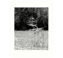 Stalks Art Print