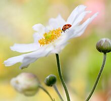 Anemone lady by Mandy Disher