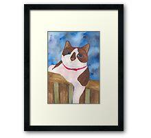 Playful Snowshoe Siamese Kitty Framed Print