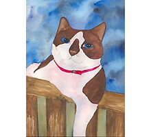 Playful Snowshoe Siamese Kitty Photographic Print