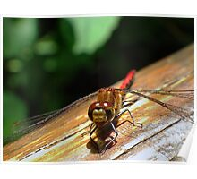 Friendly smiling dragonfly Poster