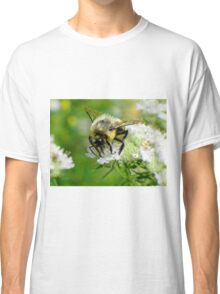 Bumble bee on white flower Classic T-Shirt