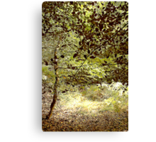 Woods in the Long Grass Canvas Print
